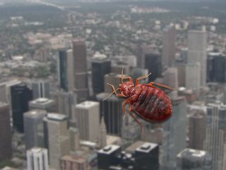 Denver 5th most bed bug-infested city in country