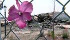 Anadarko, Firestone families 'resolve claims'