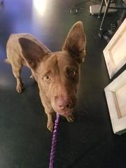 Pet of the day for September 23 - Boots the dog