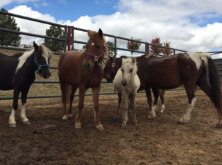 16 displaced horses travel to Colo. from Houston