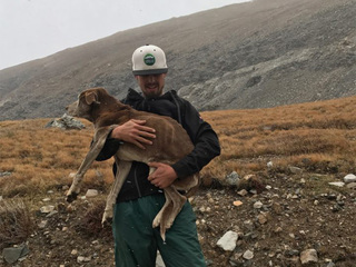 Hikers save dog stranded on Colorado 14er