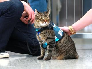 Meet Xeli, DIA's new therapy cat