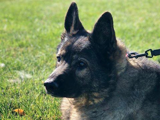 Retired Broomfield PD K-9 laid to rest