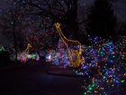 Zoo Lights bringing holiday sparkle in December