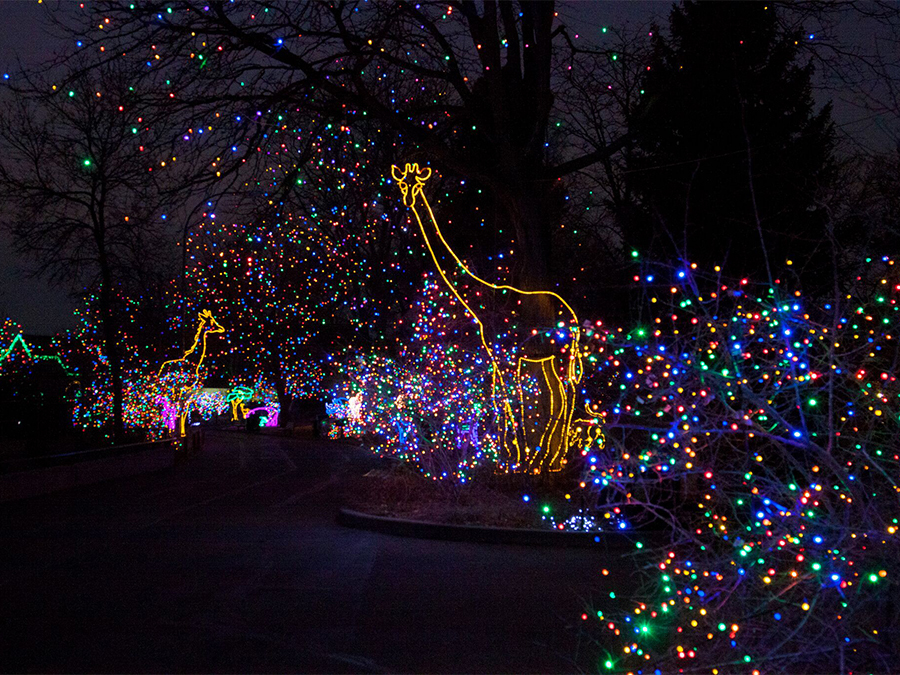 denver zoos zoo lights to sparkle with holiday fun this december denver7 thedenverchannelcom - Christmas Lights At The Zoo