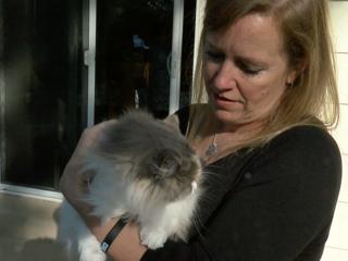 7Everyday Hero volunteers with cat rescues