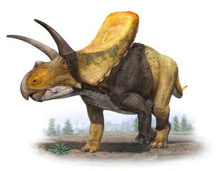The Thornton triceratops isn't a triceratops