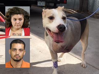 2 arrested after service dog shot in robbery
