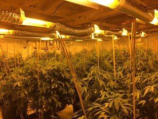 Deputies bust illegal pot grow in El Paso Co.