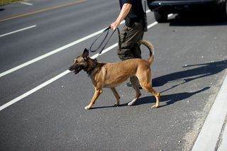 Colo. Supreme Court to review drug dog decision