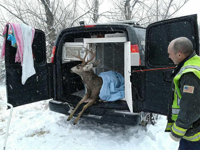 West Metro Dive Team rescues deer that fell through ice
