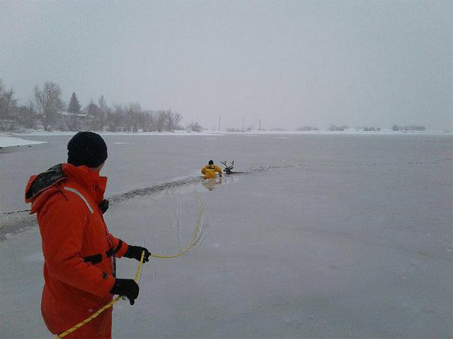 West Metro Dive Team rescues deer that fell through ice