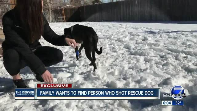 Littleton family demands justice after dog shot with pellet gun