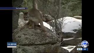 Grand Slam Wildlife Raffle proposed in Colorado
