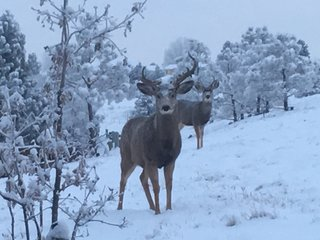 Photos: Snow dumps much-needed snow in Colorado