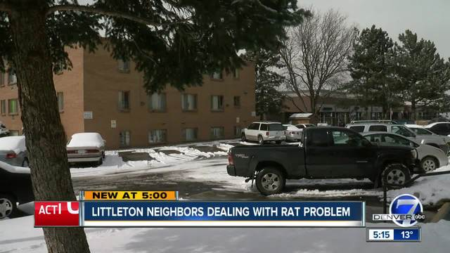 Could development be partially to blame for rodent problem in Littleton-