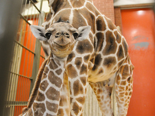 Denver Zoo throwing birthday party for Dobby