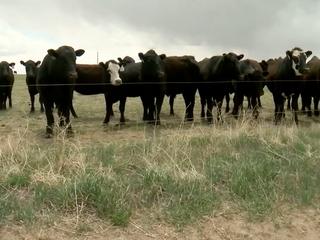 USDA kills animal welfare rule for organic meat