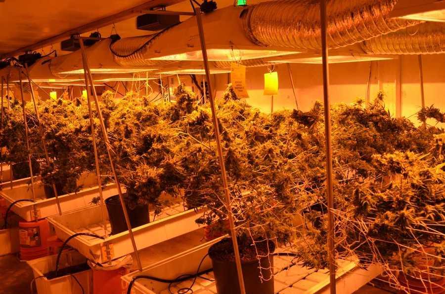 colorado realtors resist dea u2019s idea of illegal grow house