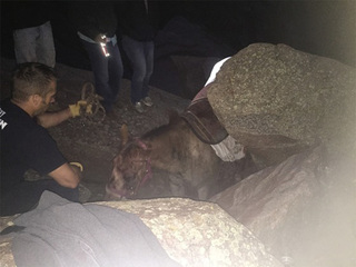 Horse injured at a Boulder Co. trail euthanized
