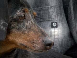 Dog owner warns others after raccoon attack