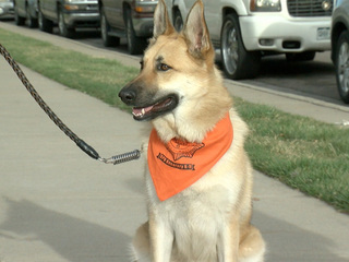 Denver police enlists the help of 'pup patrols'
