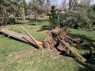 Woman killed by falling tree limb in Louisville