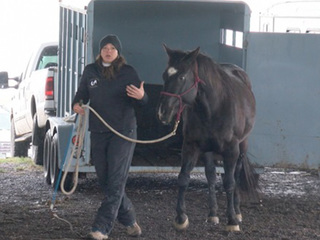 Colorado horse owners train to evacuate animals