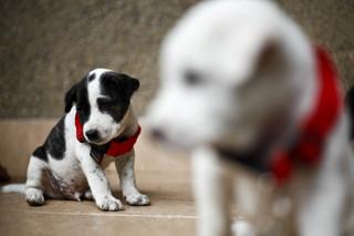 Puppy tests positive for rabies in Pueblo