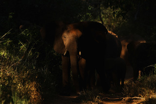 Evergreen man fined $25K for killing elephant