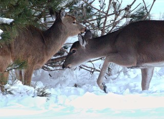 License limit increased for some Colo. big game