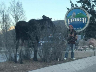 Officials seek 2 men in 3rd moose harassing case