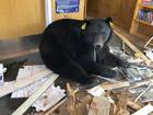 Bear stuck inside Colorado post office