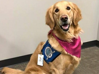 Fort Collins comfort dog deployed to Texas