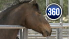 Colo. horses slaughtered despite rescue attempts