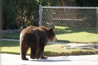 Fatal bear attacks rare, but possible