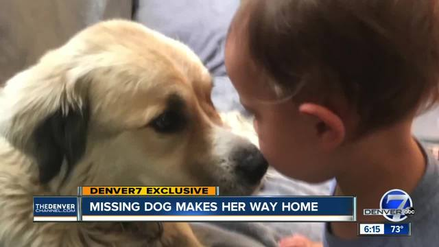 Colorado dog missing for months survives frigid nights- lonely days to…