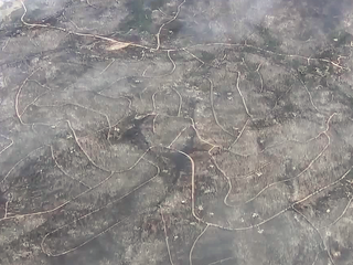 104 homes destroyed in Spring Fire