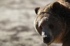 Mesa County fair to continue with bear act