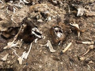Animal carcasses dumped near Colorado camp site