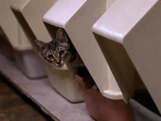 Cat-borne parasite might boost entrepreneurship