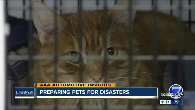 AAA Talks Preparing Pets for Disasters