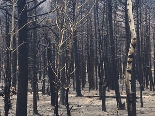 Families hope to rebuild after Spring Fire