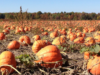 13 Colorado pumpkin patches to go to this fall