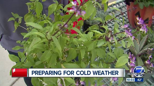 Big temperature drop raises concerns about plants, underground ...