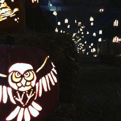 See inside the Pumpkin Nights Festival