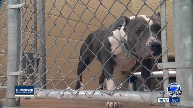Should small-town success of No Kill movement be spread to all of Colorado-