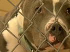 No Kill works in Fremont Co. What about Denver?
