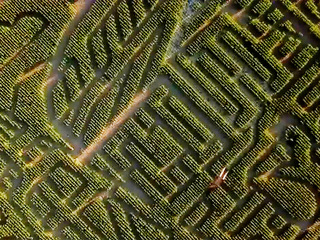 11 amazing Colorado corn mazes to get lost in