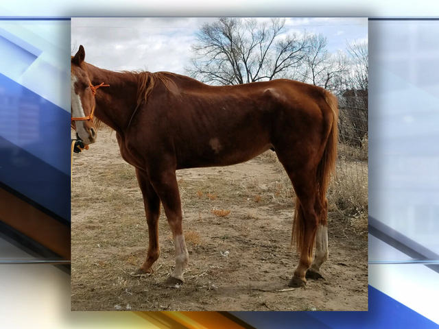 two horses two dead birds seized in el paso county animal cruelty